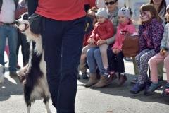 Állatok Világnapja 2016
